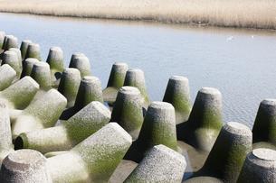 多摩川河川敷のテトラポットの写真素材 [FYI04920156]