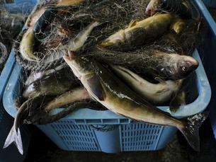 ホッケ漁の写真素材 [FYI04920742]