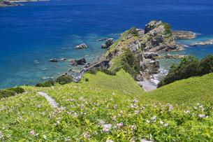 甑島 鳥の巣山展望所からの眺望の写真素材 [FYI04920927]