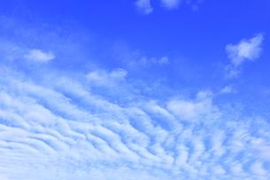 さば雲の写真素材 [FYI04920937]