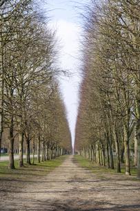 トリアノン通り ヴェルサイユ宮殿の並木道 Avenue de Trianonの写真素材 [FYI04921002]