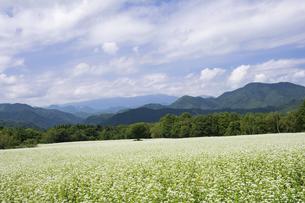 南会津の蕎麦畑の写真素材 [FYI04921372]
