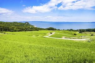 【香川県 豊島】米の稲を育てる夏の唐櫃棚田 旅の写真素材 [FYI04921541]