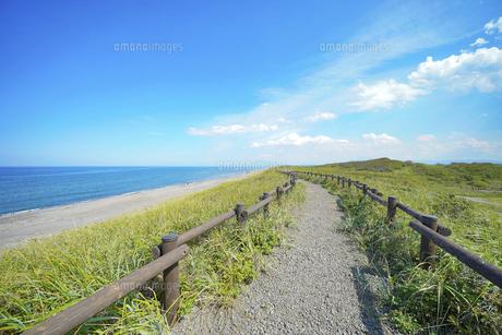 海沿いの草原と晴れた夏の空の写真素材 [FYI04921616]