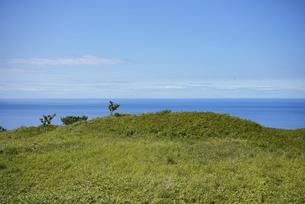 海沿いの草原と晴れた夏の空の写真素材 [FYI04921618]