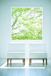 新緑の光入るリビングに置かれた2脚のソファーの写真素材 [FYI04921987]