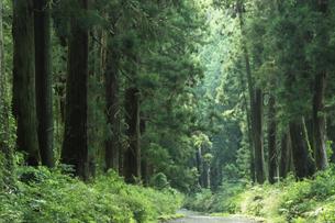 日光杉並木の写真素材 [FYI04922237]