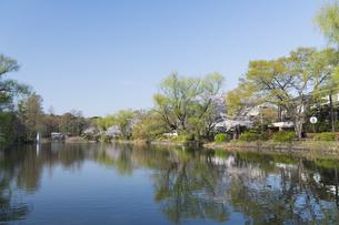 春の石神井公園の写真素材 [FYI04922310]