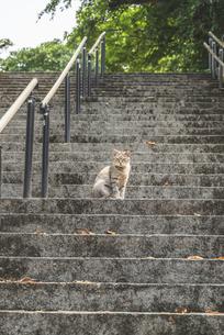 公園の階段でひと休みする猫の写真素材 [FYI04922384]