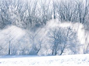 気嵐と森の写真素材 [FYI04922496]