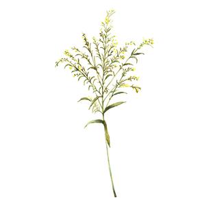 水彩で描かれた黄色い小花のイラスト素材 [FYI04922936]
