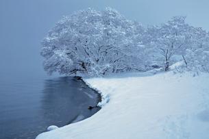 1月 琵琶湖湖岸の雪景色の写真素材 [FYI04922941]