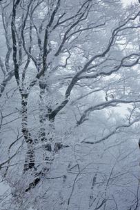 1月 近畿の屋根の高見山の霧氷の写真素材 [FYI04922948]