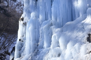1月 氷瀑の世界 -南牧(みなみまき)村の湯川渓谷-の写真素材 [FYI04923342]