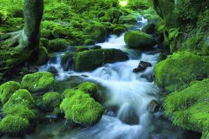 木谷沢渓流 スローシャッター(鳥取県 日野郡江府町)の写真素材 [FYI04923652]