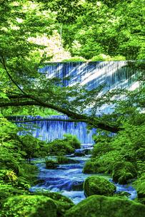 木谷沢渓流(鳥取県 日野郡江府町)の写真素材 [FYI04923654]