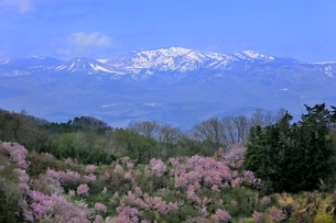 花見山公園の写真素材 [FYI04923752]