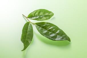 生茶葉の集合の写真素材 [FYI04923791]