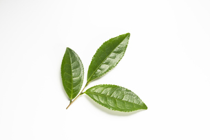 生茶葉の集合の写真素材 [FYI04923803]