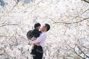 桜をバックに入園児を抱える父親の写真素材 [FYI04924225]