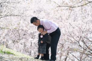桜をバックに入園児を抱える父親の写真素材 [FYI04924229]