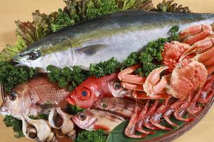 海鮮食材の写真素材 [FYI04924332]