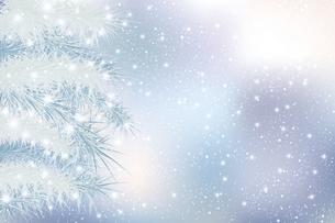 モミと雪のクリスマス背景のイラスト素材 [FYI04924693]