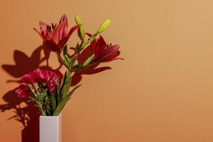 オレンジ色の壁背景の百合とイロマツヨイグサの写真素材 [FYI04924852]