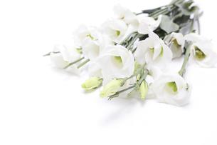 トルコキキョウの花束の写真素材 [FYI04924853]
