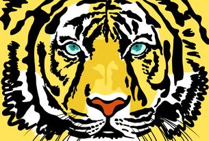 正面を向いている虎の顔のアップのカラーイラスト【葉書サイズ】のイラスト素材 [FYI04924901]