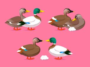 Ducky Couplesのイラスト素材 [FYI04924977]