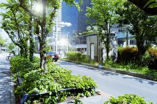 日差しと新緑と車道の写真素材 [FYI04925065]