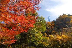 竜神大吊橋の紅葉の写真素材 [FYI04925224]