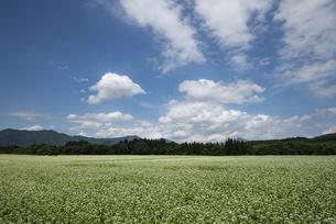 猿楽台地のソバ畑の写真素材 [FYI04925287]