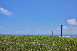 小浜島のさとうきび畑の写真素材 [FYI04925585]