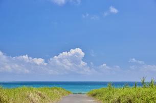 小浜島と海へと続く道の写真素材 [FYI04925605]