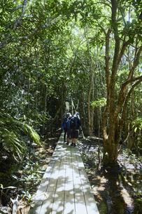 西表島のジャングルの写真素材 [FYI04925664]