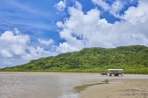 由布島と西表島の間を行き交う水牛車の写真素材 [FYI04925671]