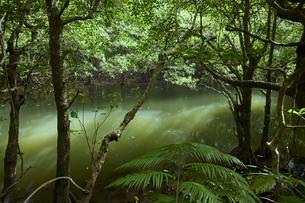 西表島の浦内川の写真素材 [FYI04925680]