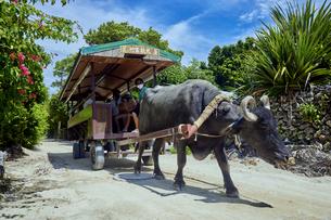 竹富島の水牛車の写真素材 [FYI04925681]