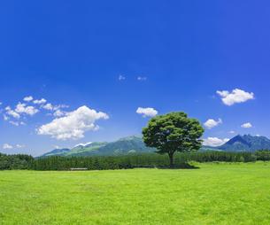 熊本県 風景 月廻り公園よりの眺望 の写真素材 [FYI04925697]