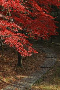紅葉が美しい秋の生田緑地の遊歩道の写真素材 [FYI04925733]
