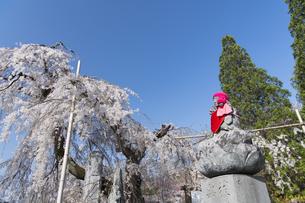 しだれ桜とお地蔵様の写真素材 [FYI04925806]