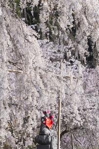 しだれ桜とお地蔵様の写真素材 [FYI04925816]