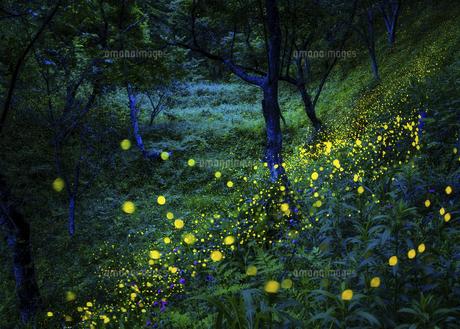 春アザミとヒメボタルの写真素材 [FYI04925964]