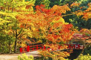 秋の紅葉谷公園の写真素材 [FYI04925983]