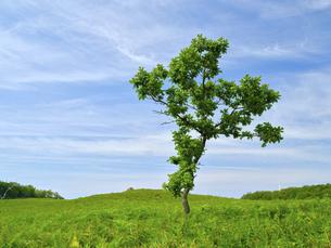 草原と木の写真素材 [FYI04926005]