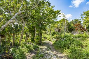 国の史跡に指定されている玉城城の小道と拝所の写真素材 [FYI04926155]