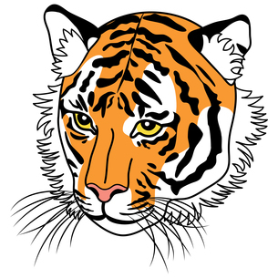 斜めを向いた虎の顔のイラストのイラスト素材 [FYI04926289]