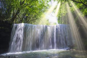 初夏の鍋ヶ滝の写真素材 [FYI04926339]